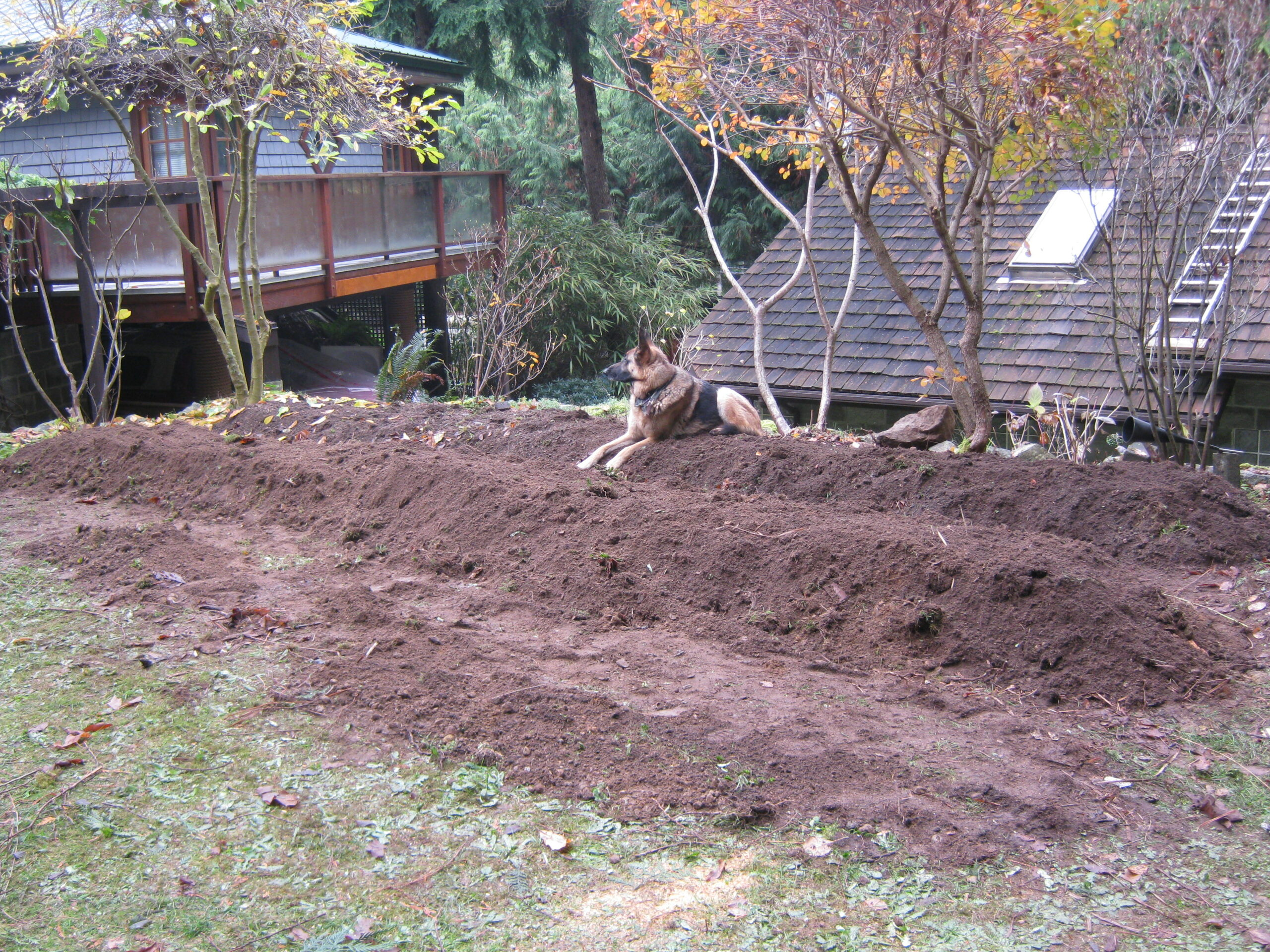 dog in the permaculture garden