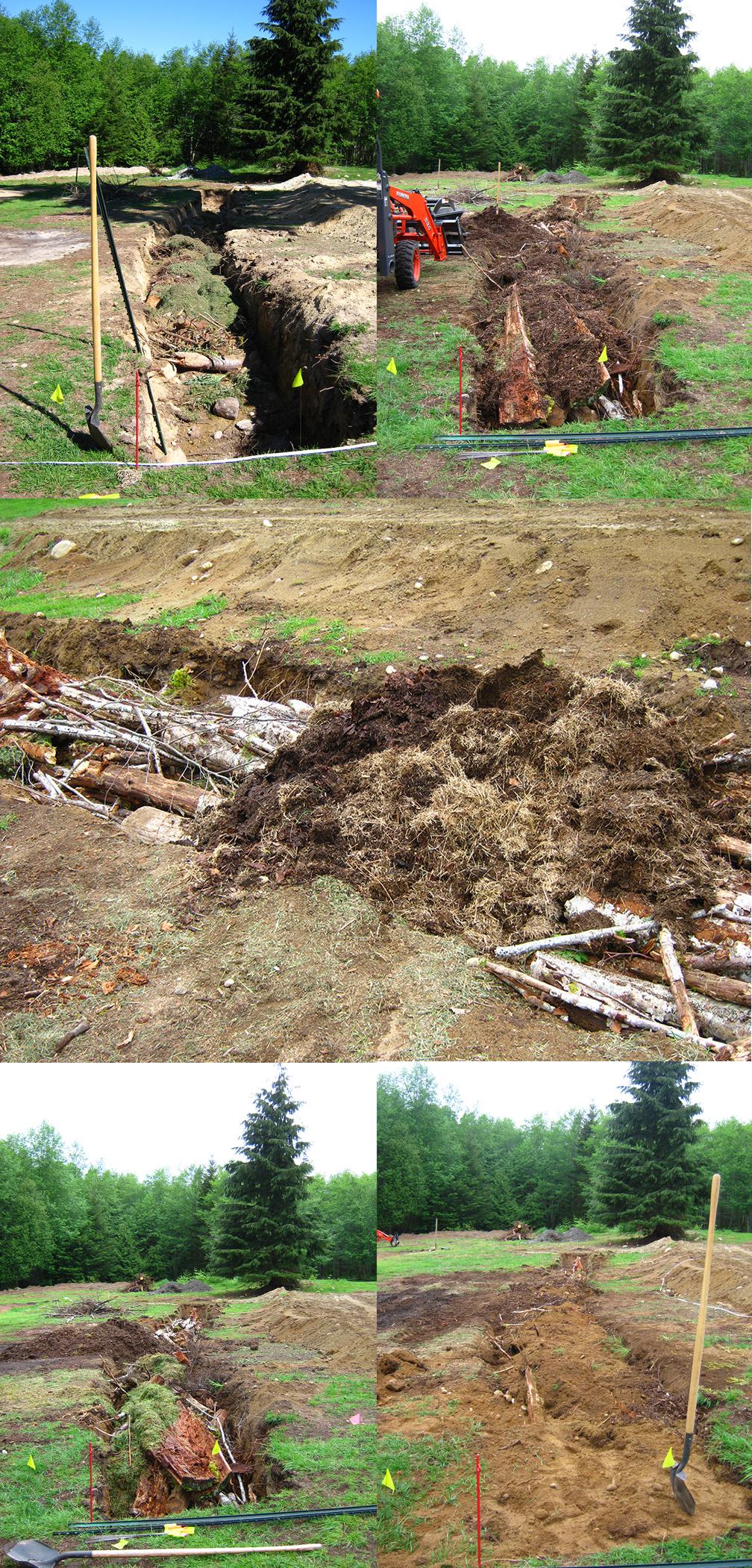 build a permaculture garden