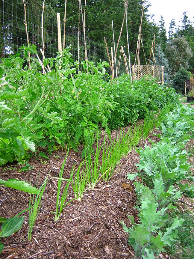 permaculture vegetable garden