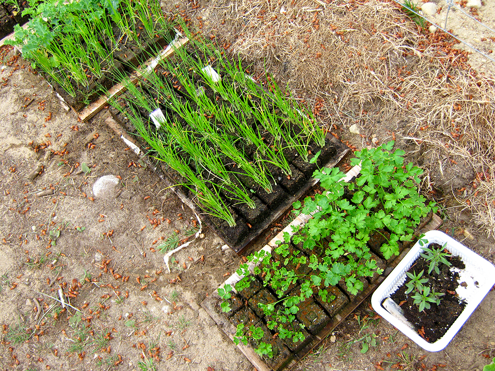 permaculture garden